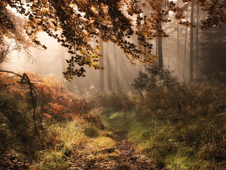 forest bath.jpg